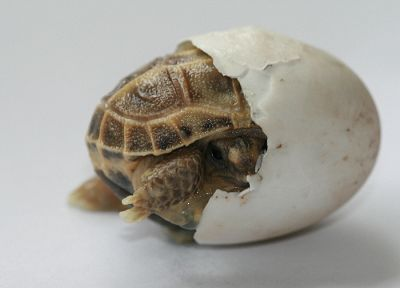nature, eggs, animals, turtles - random desktop wallpaper