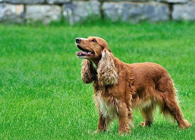 animals, grass, dogs - related desktop wallpaper