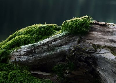 nature, trees, moss - random desktop wallpaper