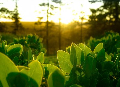 green, nature, leaves, plants, sunlight - random desktop wallpaper