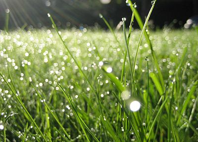 nature, grass, plants, water drops - random desktop wallpaper