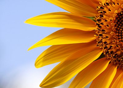 flowers, macro, sunflowers, yellow flowers - related desktop wallpaper