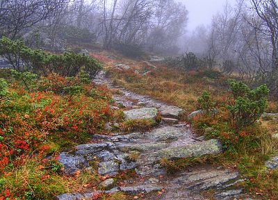 nature, forests, paths, mist, trail, HDR photography - desktop wallpaper
