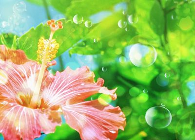 green, nature, flowers, bubbles, hibiscus - related desktop wallpaper