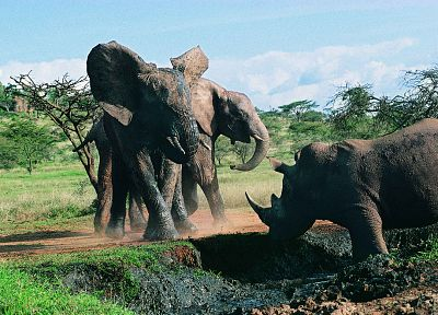 animals, fight, rhinoceros, elephants - related desktop wallpaper