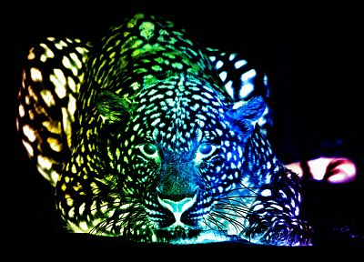 multicolor, leopards, colors - random desktop wallpaper