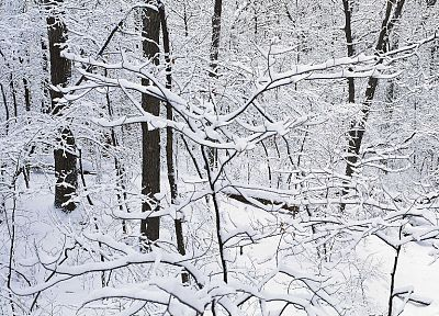 winter, snow, trees, multiscreen - random desktop wallpaper