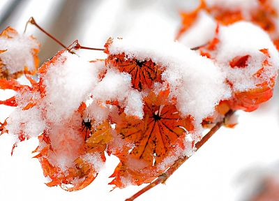 ice, nature, winter, snow, leaf, autumn, red, orange, leaves, cold, frozen - related desktop wallpaper