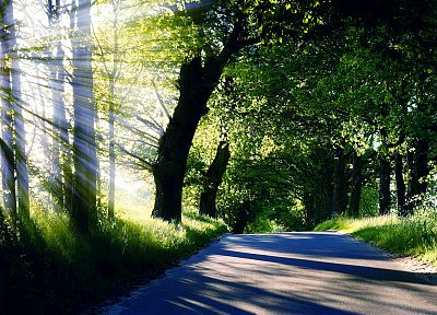 light, nature, trees, sunlight, roads - random desktop wallpaper