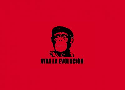 Che Guevara, monkeys, simple background - desktop wallpaper