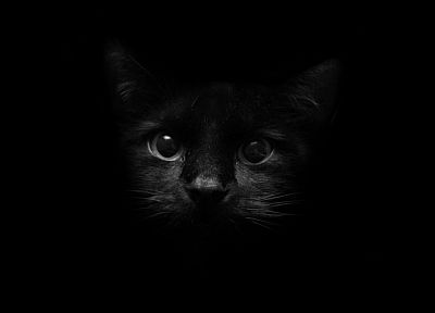 black, cats, animals - random desktop wallpaper