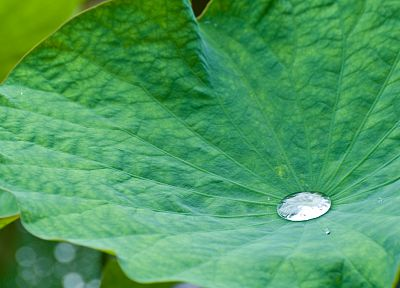 nature, leaf, leaves, plants - desktop wallpaper