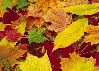 nature, autumn, leaves, fallen leaves - related desktop wallpaper