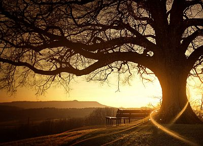 sunset, landscapes, nature, trees, silhouettes, bench, sunlight, Desktopography - desktop wallpaper