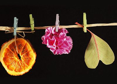 flowers, oranges, slices - random desktop wallpaper