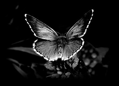 insects, monochrome, black background, butterflies - desktop wallpaper
