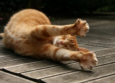 cats, animals, wooden floor, stretch - related desktop wallpaper
