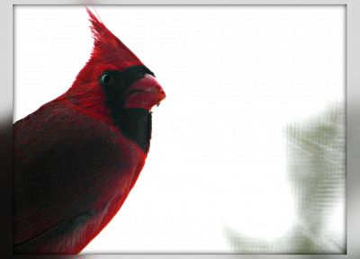 birds, Northern Cardinal - desktop wallpaper