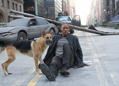 movies, dogs, Will Smith, I Am Legend - desktop wallpaper