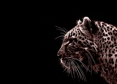 animals, jaguars, photo manipulation, black background - desktop wallpaper