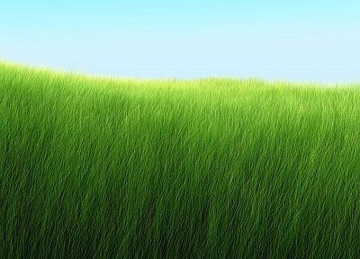 nature, grass, fields, Grassland - desktop wallpaper