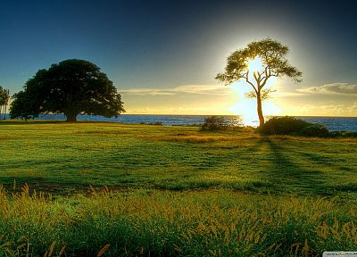 sunset, trees, meadows, sea - random desktop wallpaper