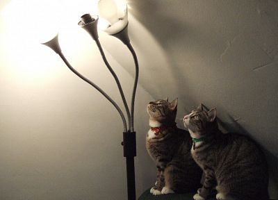 lights, cats, animals, lamps - random desktop wallpaper