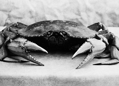 grayscale, lunch, monochrome, crabs - desktop wallpaper