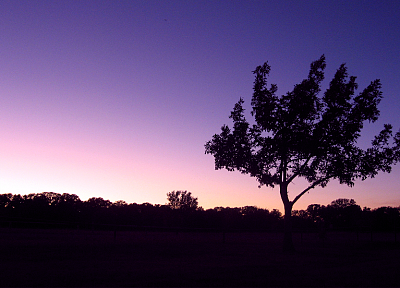 evening, skies, lone tree - related desktop wallpaper