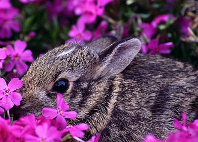 bunnies, flowers, animals, pink flowers - related desktop wallpaper