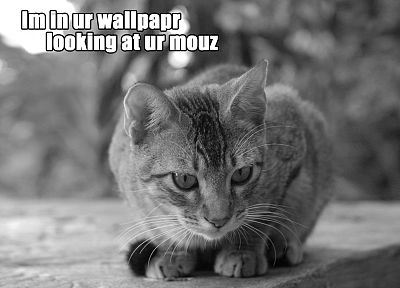 cats, stare, funny, monochrome, lolcat, mice, greyscale - desktop wallpaper