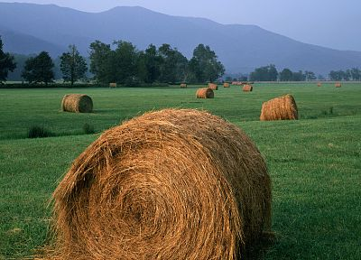 landscapes, grass, fields, hay, farming, agriculture - random desktop wallpaper