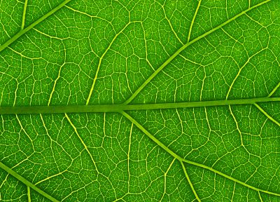 green, nature, leaf, macro - related desktop wallpaper
