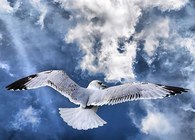 nature, birds, skyscapes - random desktop wallpaper
