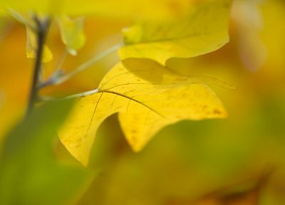 nature, autumn, leaves, depth of field - desktop wallpaper