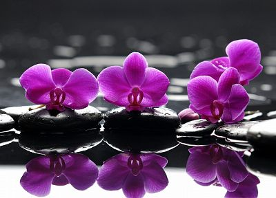 water, flowers, selective coloring, orchids, pink flowers - desktop wallpaper