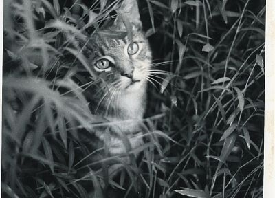 cats, grayscale, monochrome - related desktop wallpaper