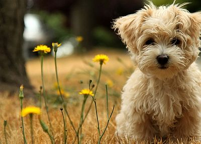 animals, dogs, puppies, wildflowers - related desktop wallpaper