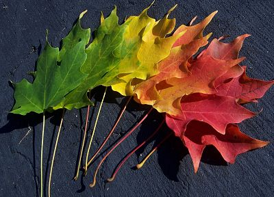 multicolor, leaves, spectrum, macro - desktop wallpaper