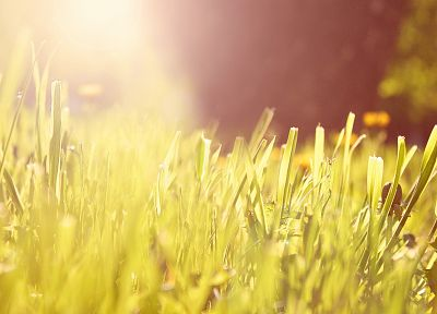 nature, grass, macro - random desktop wallpaper