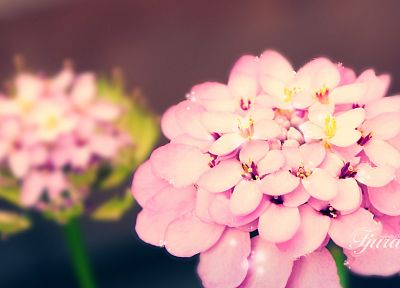 nature, flowers, depth of field - related desktop wallpaper