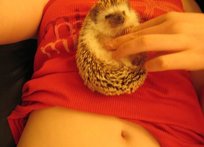 women, animals, stomach, hedgehogs - random desktop wallpaper