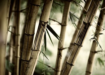 nature, forests, leaves, bamboo, plants - related desktop wallpaper