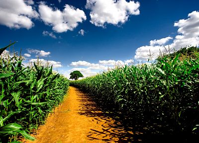 clouds, nature, fields, corn, farms - related desktop wallpaper