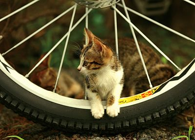 cats, bicycles, kittens - related desktop wallpaper