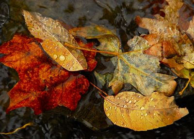 autumn, leaves, ponds, rivers - desktop wallpaper