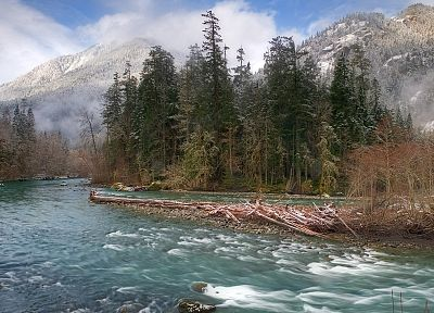 trees, mist, rivers, National Park, Washington - related desktop wallpaper