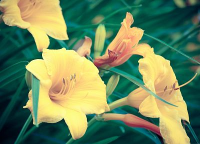 flowers, yellow flowers - random desktop wallpaper