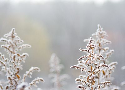 close-up, nature, snow - desktop wallpaper