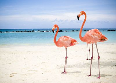 birds, animals, flamingos - related desktop wallpaper